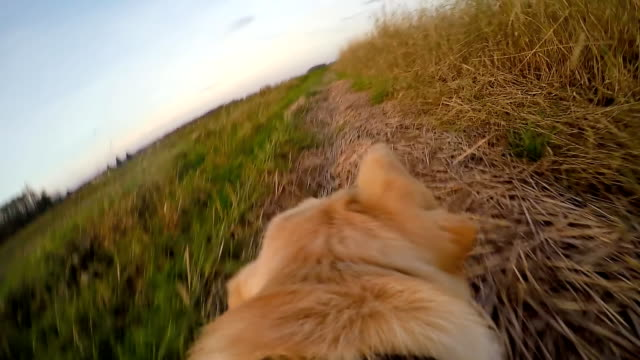 SLO MO POV Dog Running Along His Owner video