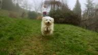 HD SUPER SLOW-MO: Dog Running Toward Camera video
