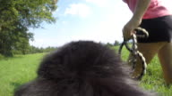POV Dog running with owner in sunshine video