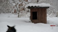 Dog runs to and then from kennel in winter video