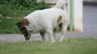 Dog scratch on the grass. video