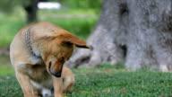 Dog scratching video