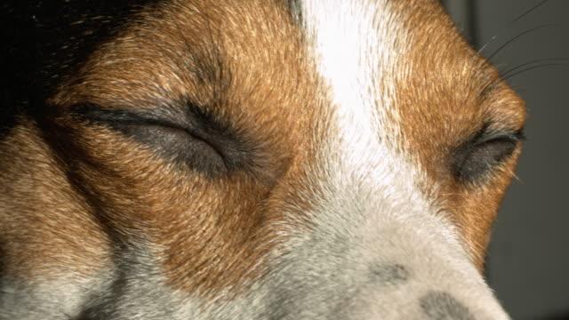 Dog screws up his eyes. video