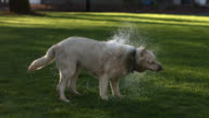 Dog shaking off water video