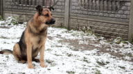 dog sitting in the snow video