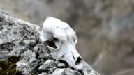 dog skull video