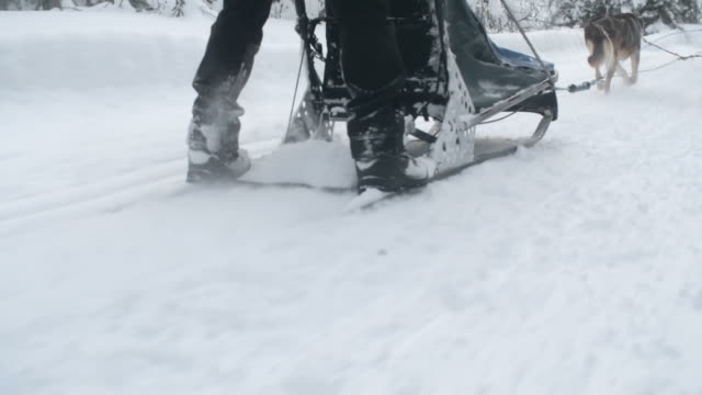 Dog sled ride in snowy woodland video
