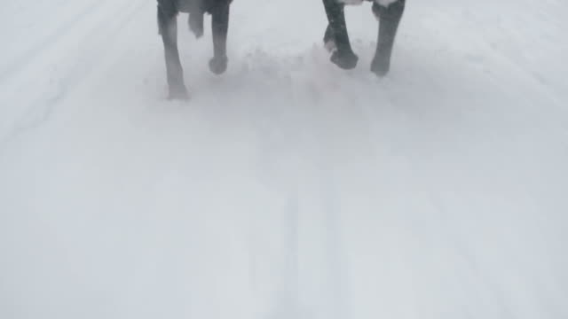 Dog sled team racing on snowy day video