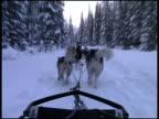 Dog Sledding / Dogsledding Past Forrest Trees video