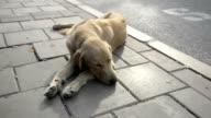 Dog sleep video