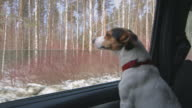 Dog stuck his head out the car window video
