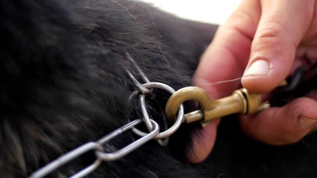 Dog trainer and German Shepherd video