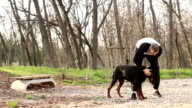 Dog trainer doing exercise with Doberman Pinscher. video
