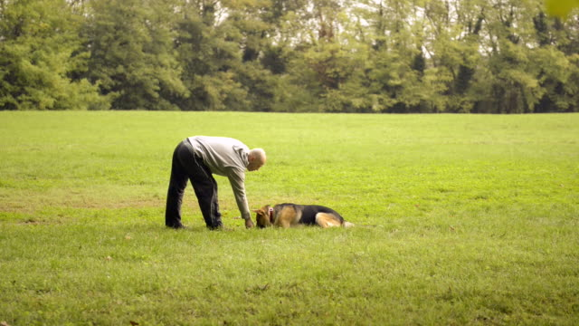 Dog trainer feeding and doing exercise with German Shepherd video