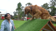 Dog trainer teaching the dog to walk on a ramp video