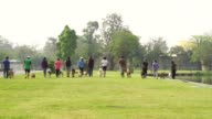 Dog training in the park video