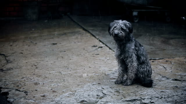 Dog Under Rain Waiting For video