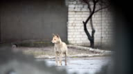 dog under the rain video