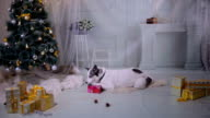 Dog unpacks a gift near near christmas Decorations during New year celebration video