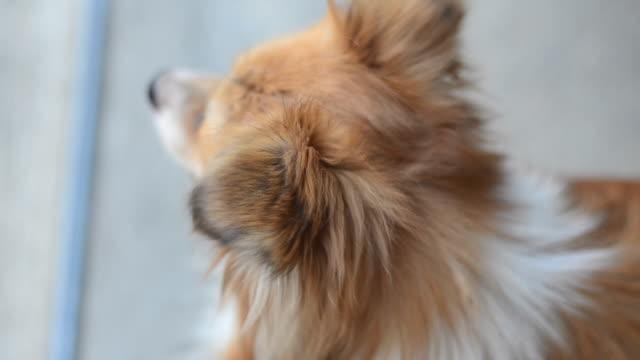 Dog video