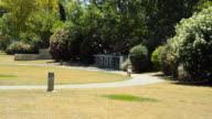 Dog Walking Towards Owner video