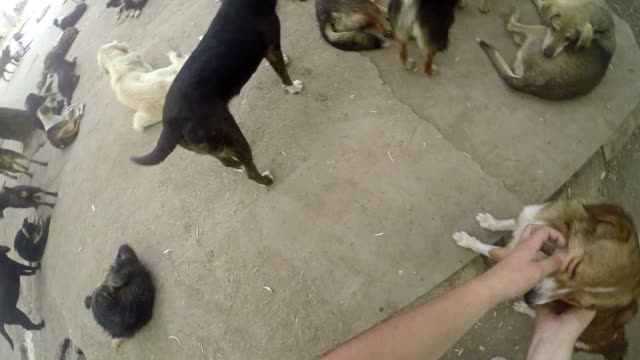 Dog wants to be cuddled video