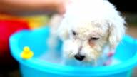dog washing in a basin video