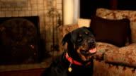Dog with a cool head tilt video
