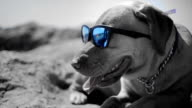 Dog with sunglasses video
