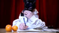 Dog writing with human hands video