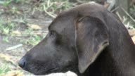 Dogs, Canines, Pets, Animals video