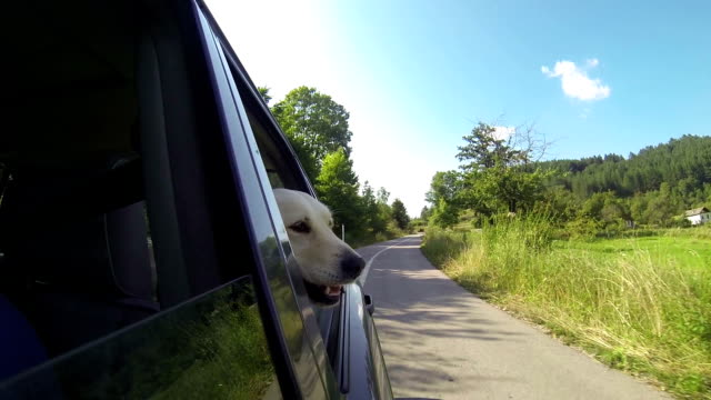 Dog's head out the window video