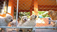 Dogs in Cage video