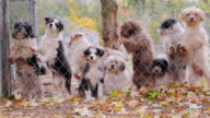 Dogs of different breeds of the grid in a kennel or animal shelter video