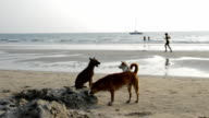 dogs on the beach video video