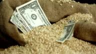 HD: Dollar Bills In Sack Of Wheat video