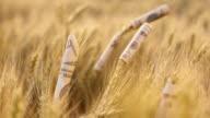 DS Dollar bills rolled around wheat ears video