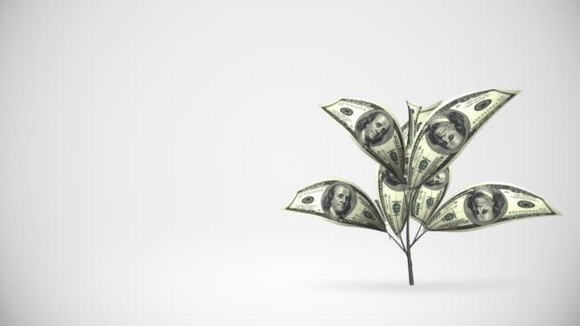 Dollar tree growing - alpha matte, HD video