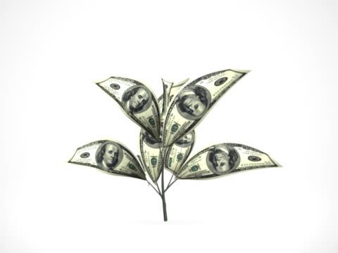 Dollar tree growing - alpha matte, NTSC video