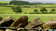 HD Dolly - Drystone wall and English countryside video