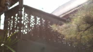Dolly green pine with  Oriental terrace background video