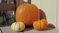 Dolly In Towards Fall Pumpkins video