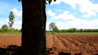 Dolly, Landscape young plant field video