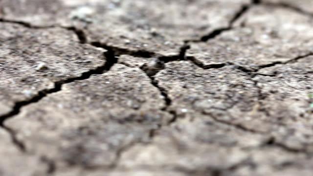 Dolly macro cracked soil video