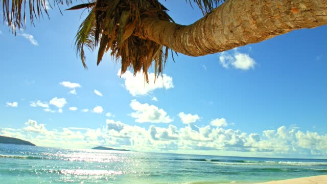 Dolly: Palm tree on tropical beach video