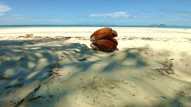 Dolly shot: Coconut at Grand Anse, Praslin Island, Seychelles video