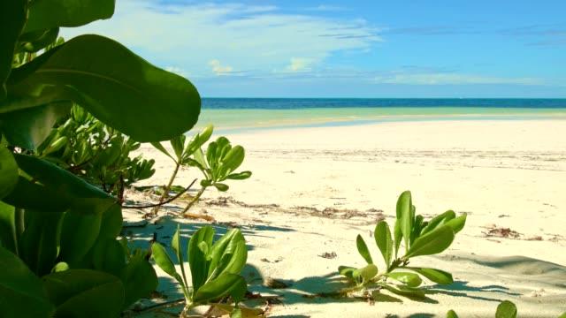 Dolly shot: Grand Anse, Praslin Island, Seychelles video
