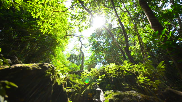 Dolly Shot: Nature in Rain Forests video