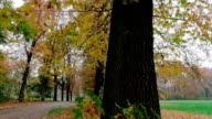 Dolly shot of a street and trees in autumn in a park video