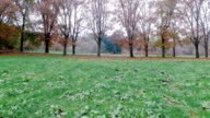 Dolly shot of grass and trees in autumn video